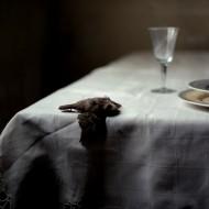 Alfonso Almendros Jaén, Family Reflections, Still life with bird, FF2011