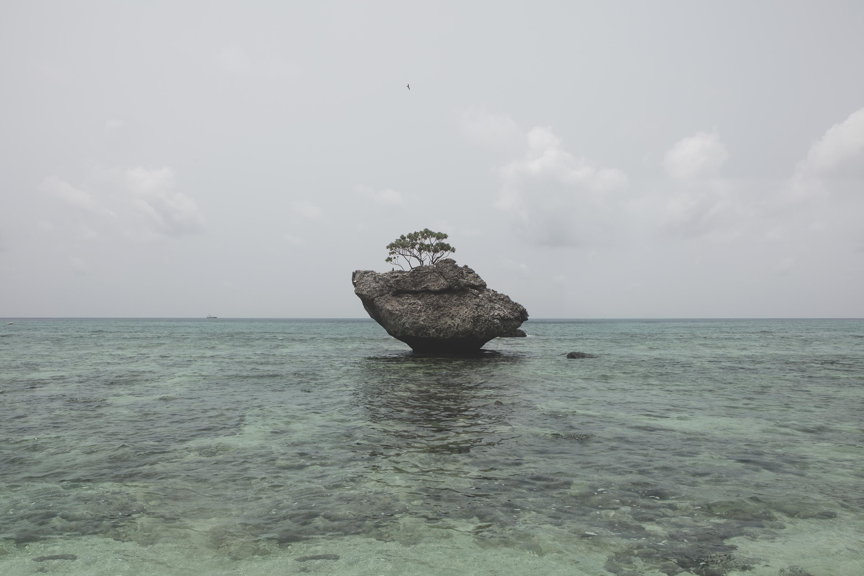 Robert Zhao Renhui, Christmas Island, Naturally